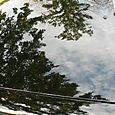 1997 Saab 900 S Reflection off Hood of Tree and Sky