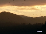 Cultus_lake_birds_migrating_sunset