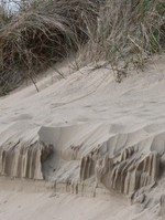Sand_forms_and_grass_1